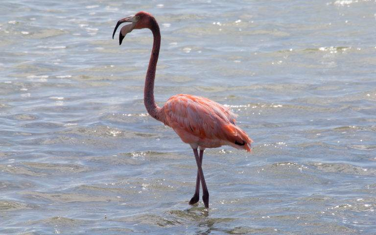 Bonaire luxury villa apartments - flamingo