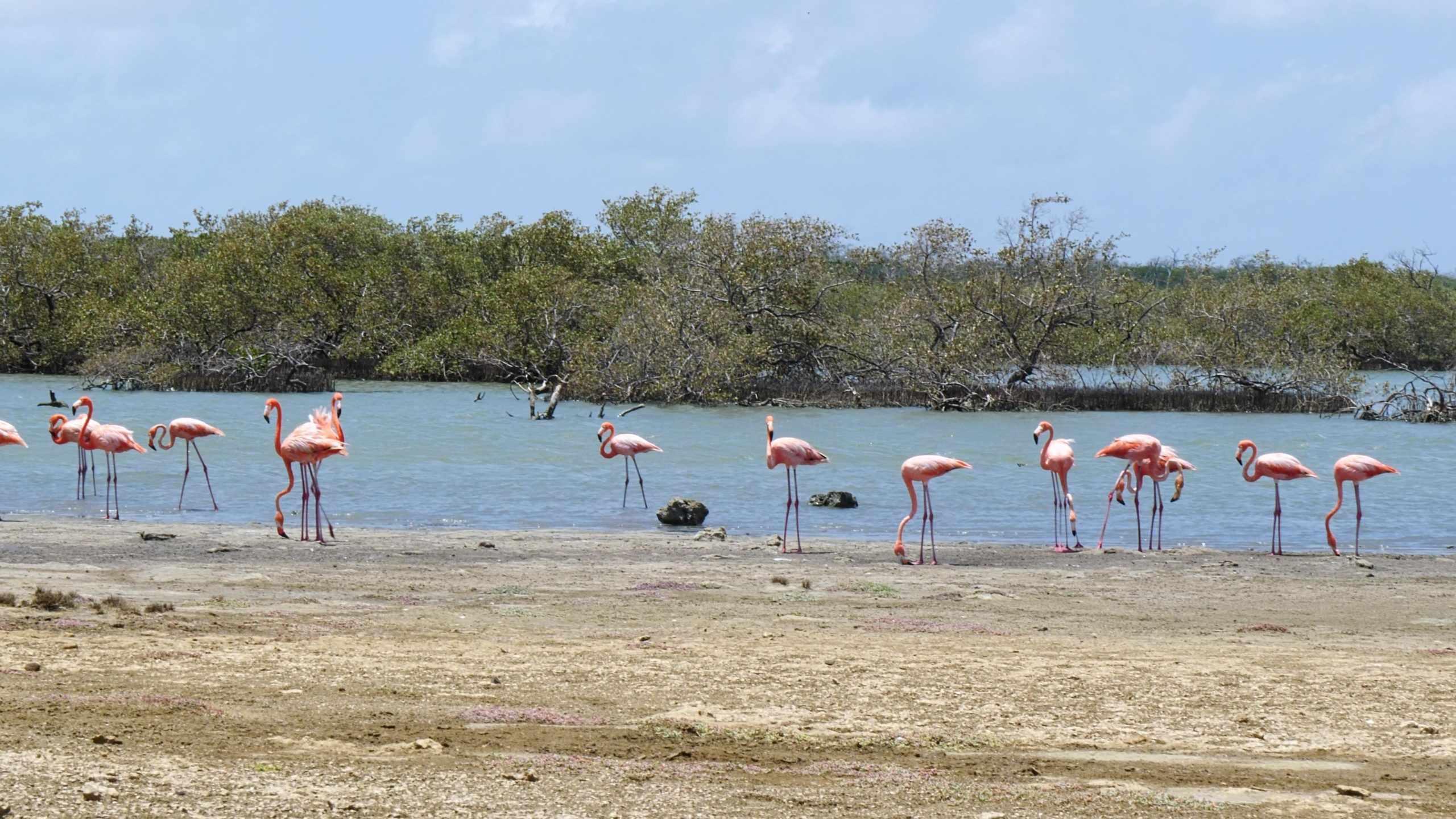 Bonaire Luxury Villa Apartments-Flamingo Lac